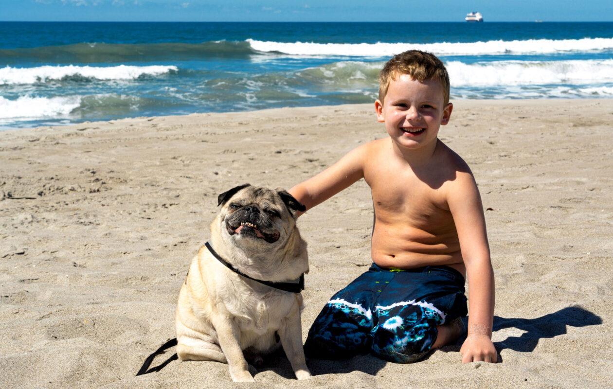 South Beach Inn is pet friendly